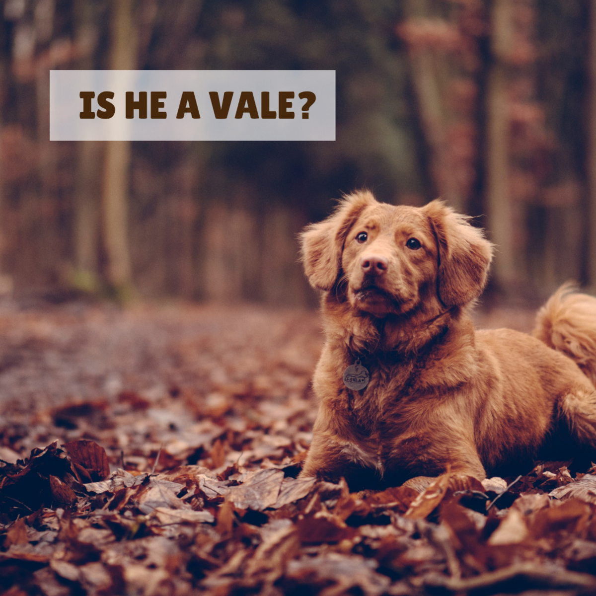 "Is your male dog a ""Vale?"""