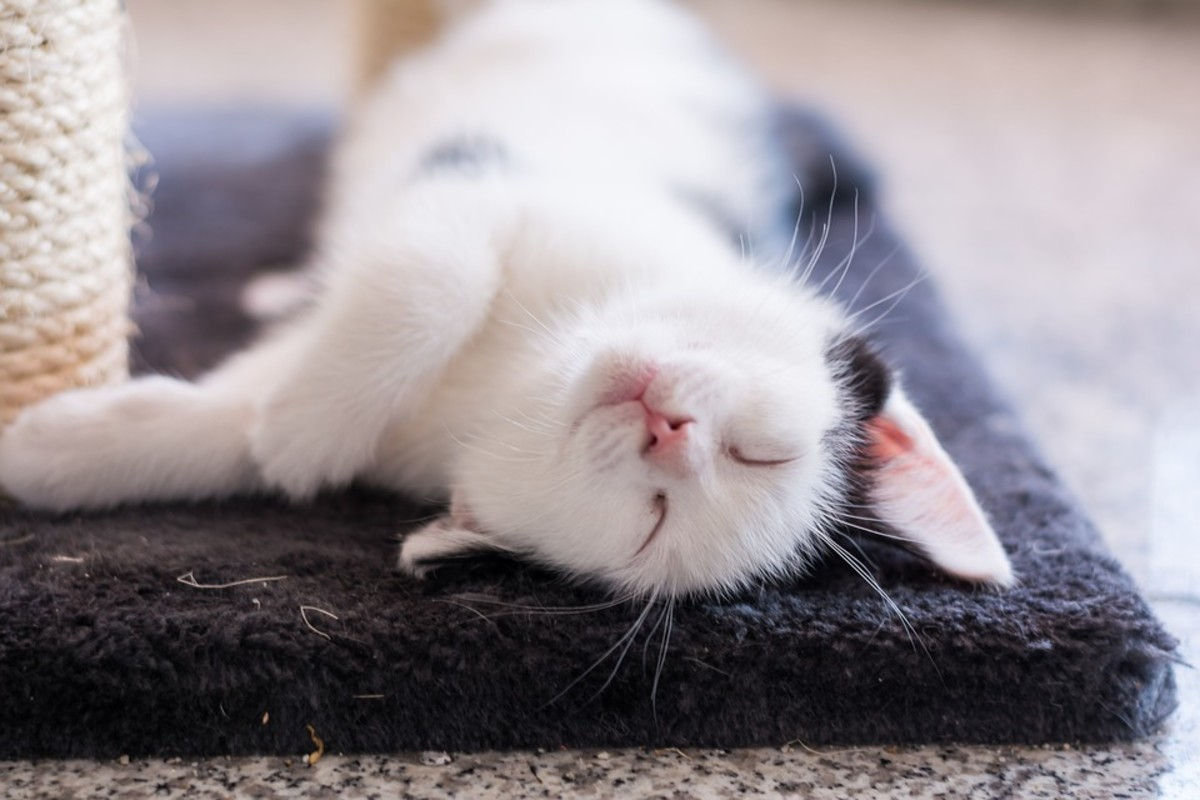 10 Reasons Why Cats Are the Best Pets - PetHelpful