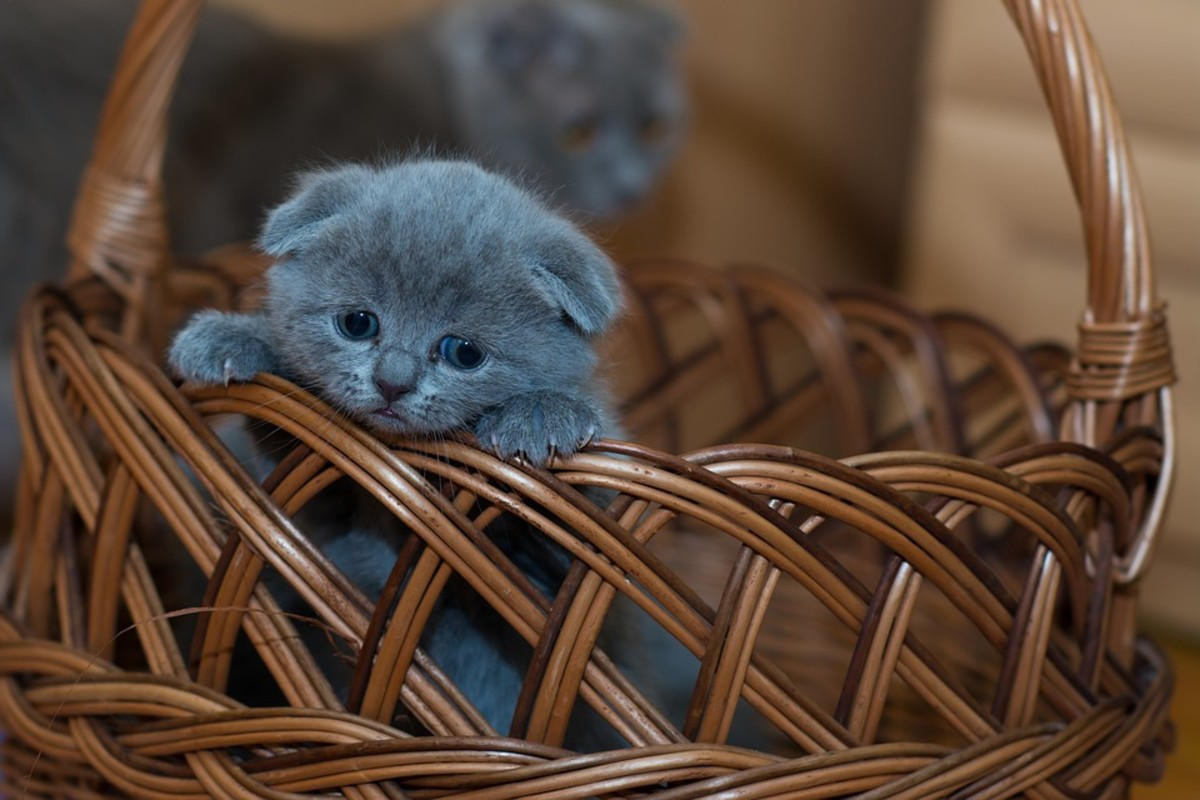 """""""I'm lonely. I wish I had another kitten to play with!"""""""