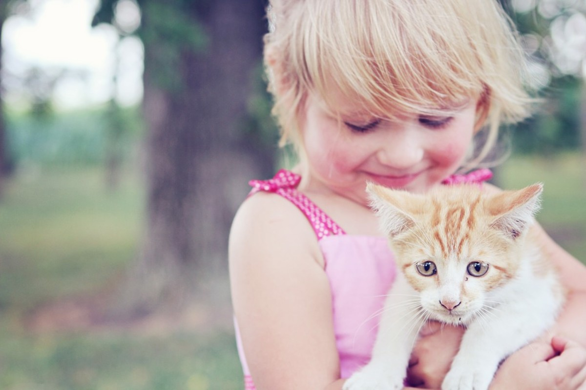 Even though kitties look huggable, they don't always enjoy being hugged.