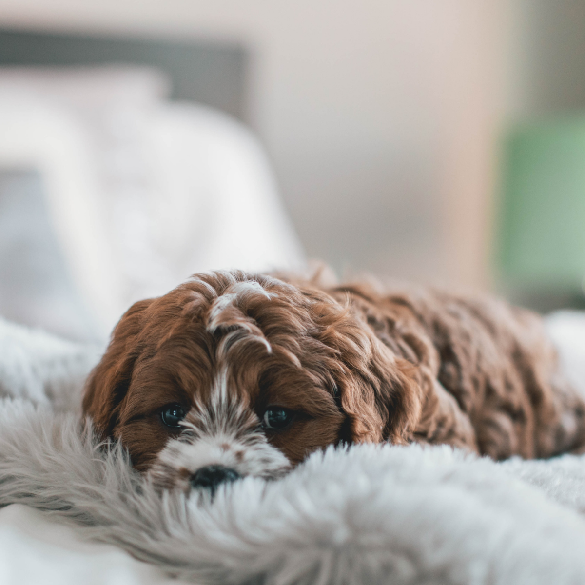 Give your pup a break if they grow tired.