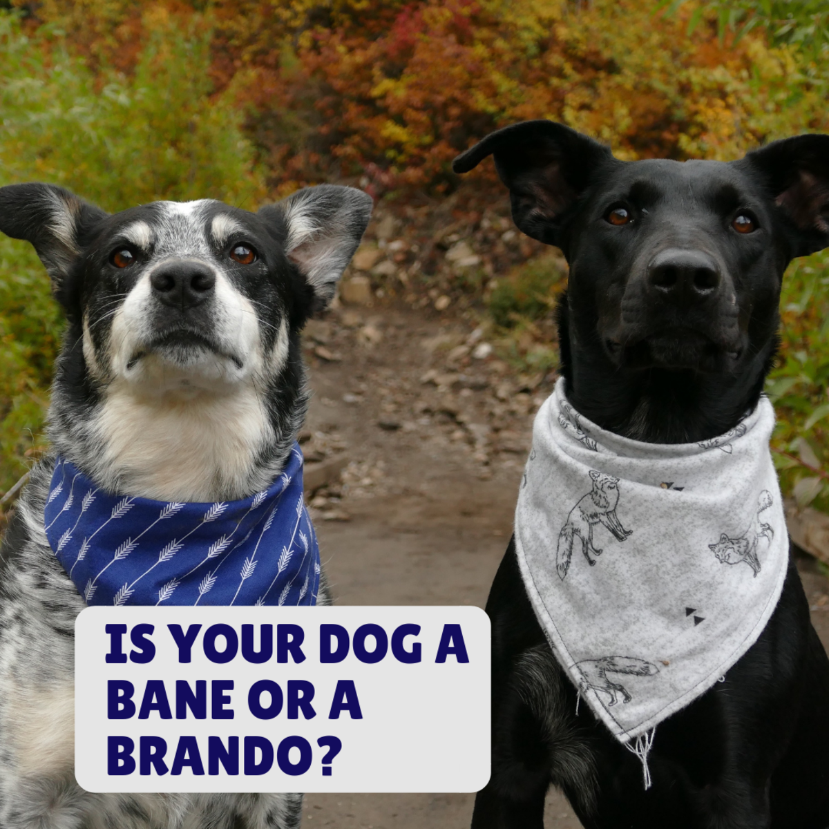 Is your strong dog a Bane or a Brando?