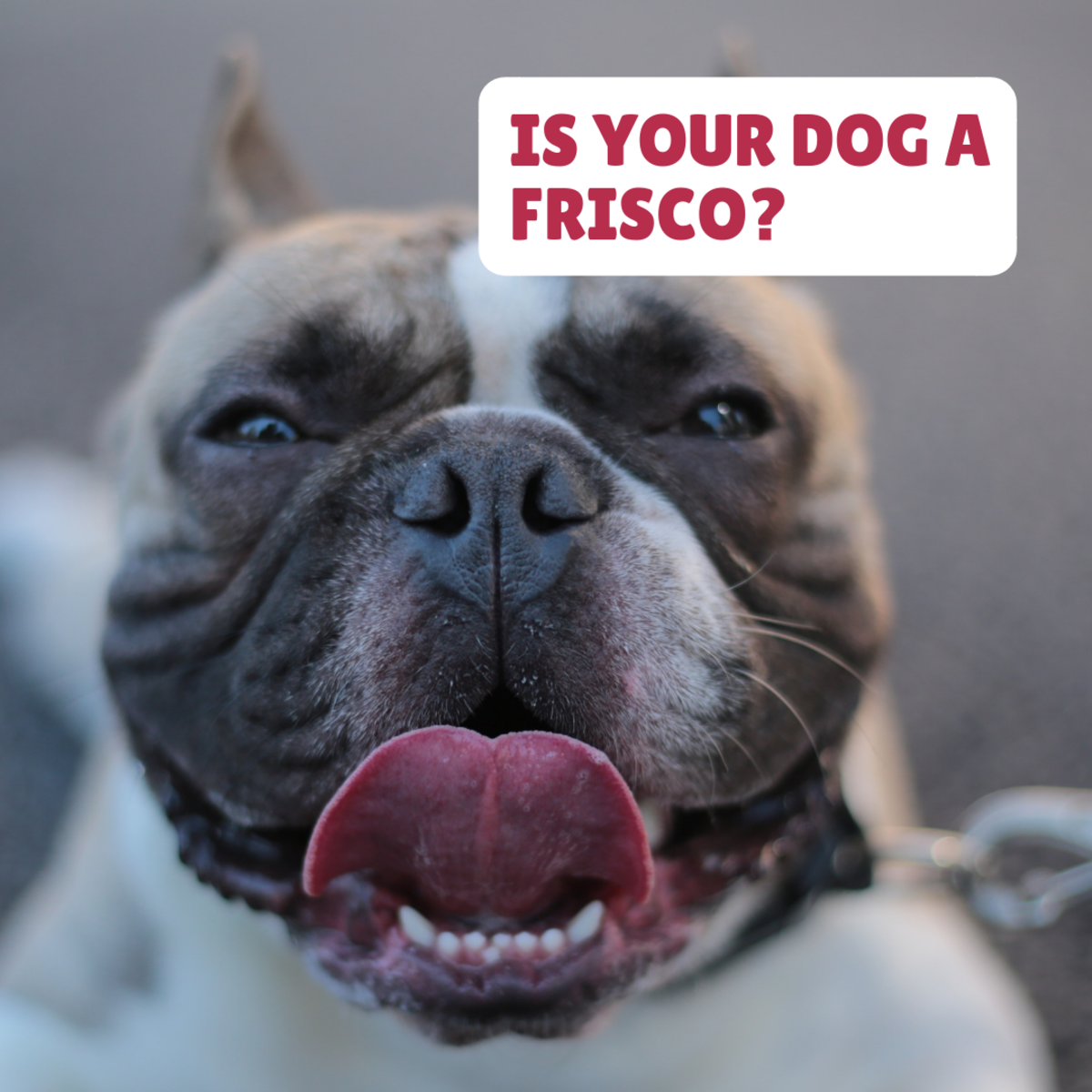 Is your tough boy a Frisco?