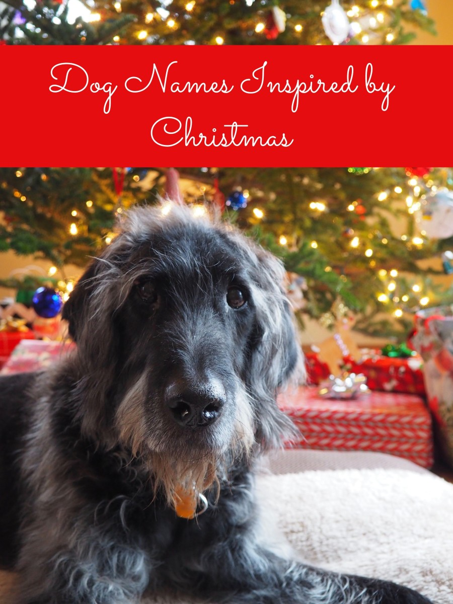 200 Holiday And Seasonal Names For Dogs Pethelpful By Fellow Animal Lovers And Experts