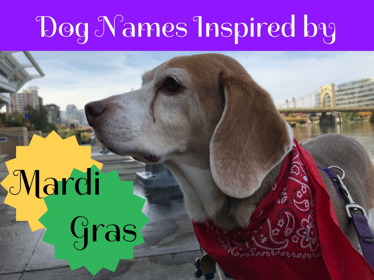 holiday-inspired-dog-names