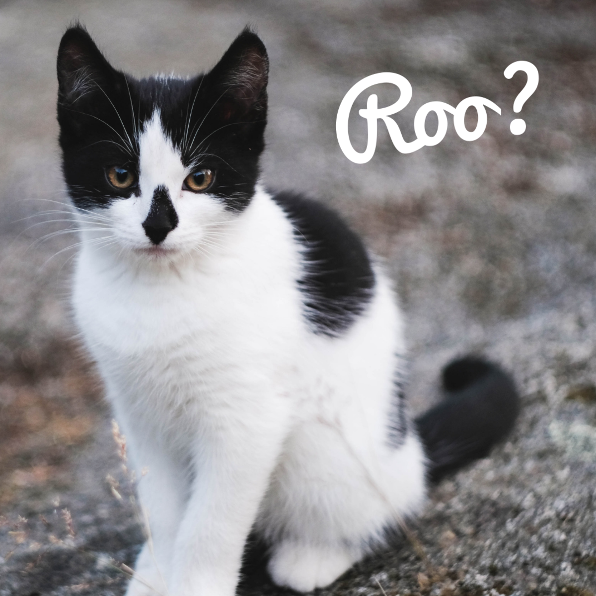 "Is your cat a ""Roo?"""