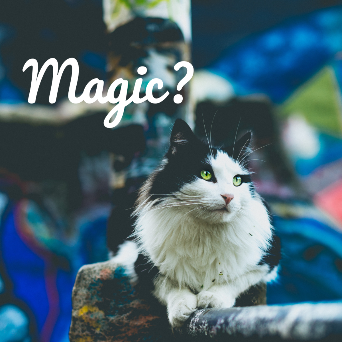 "Is your cat a ""Magic?"""