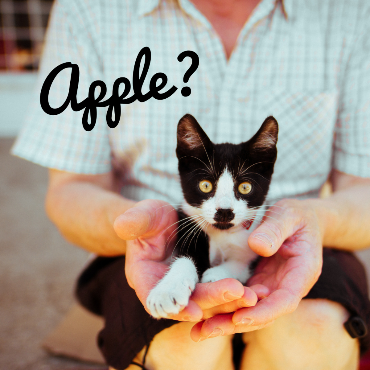 "Is your cat an ""Apple?"""
