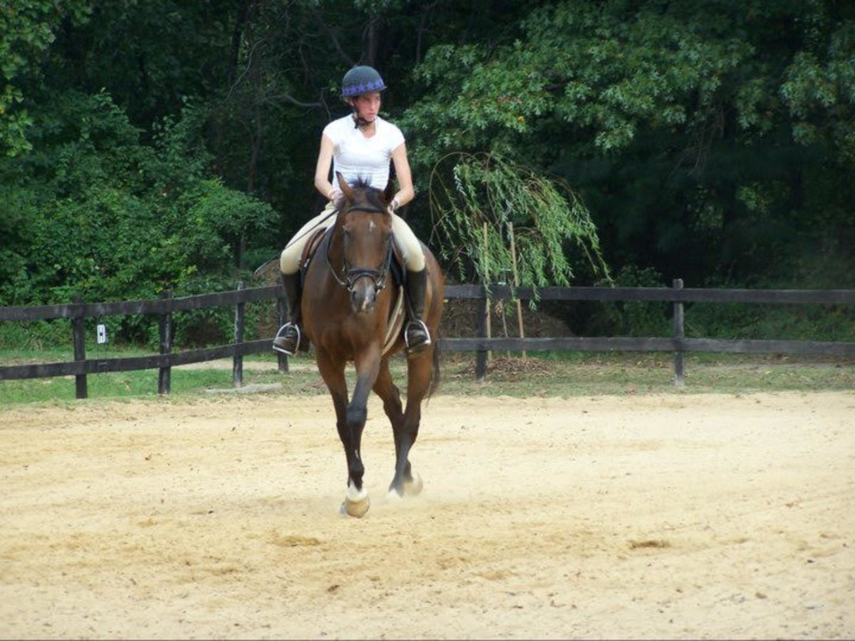 Some horses, like Kemerton, I rarely needed to use a whip on, just carrying it made a difference!