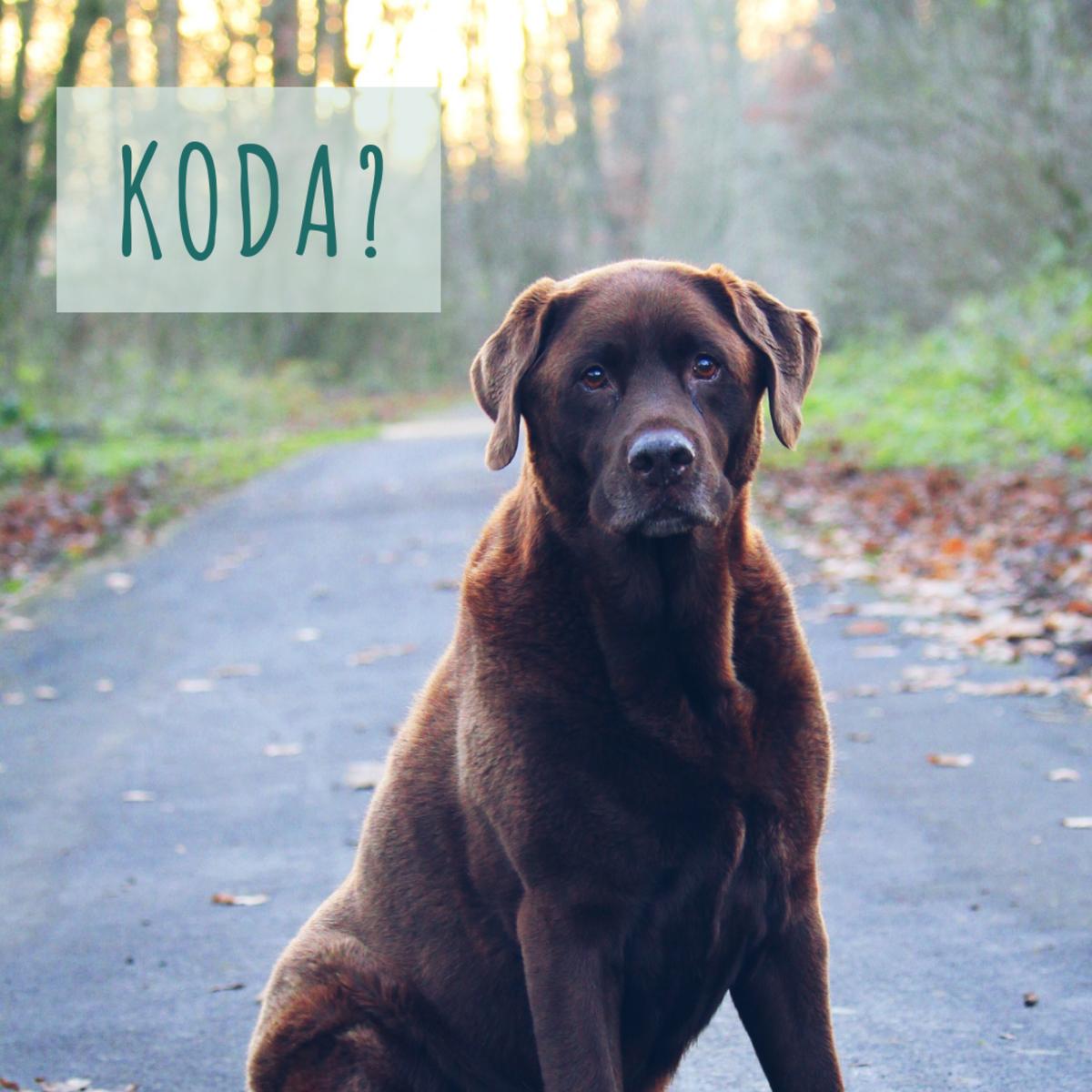 Is she a Koda?