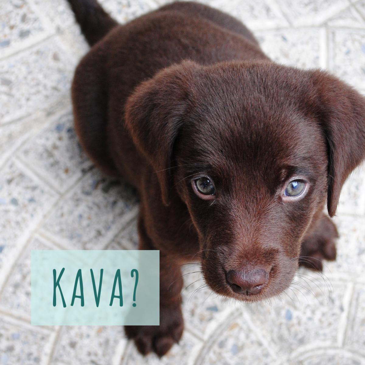 Is he a Kava?