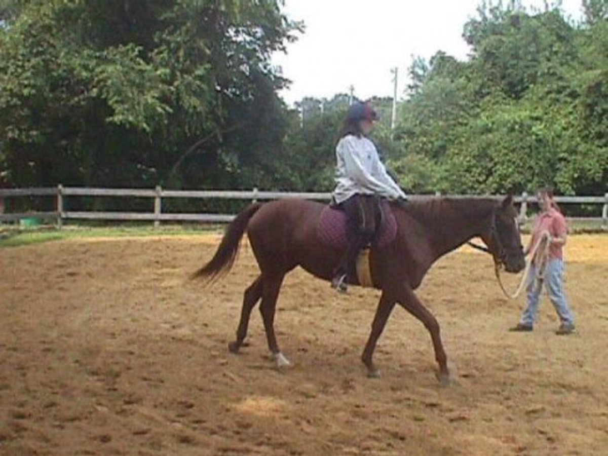 This is my heart horse, Zelda, and one of her very first rides when we were breaking her!