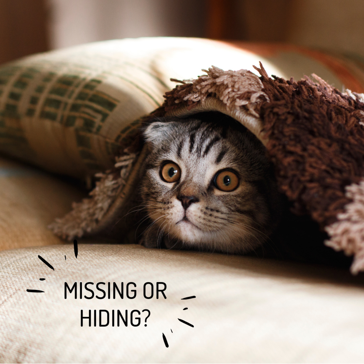 Is your shy cat missing or hiding?