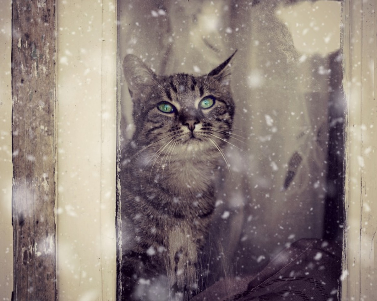 Cats and dogs should be kept inside, especially in bad weather.