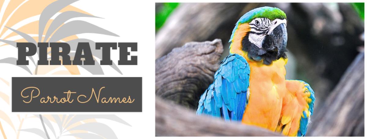 parrot-bird-names