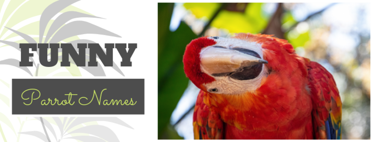 250+ Cool Parrot Names For Your Extraordinary Bird (From
