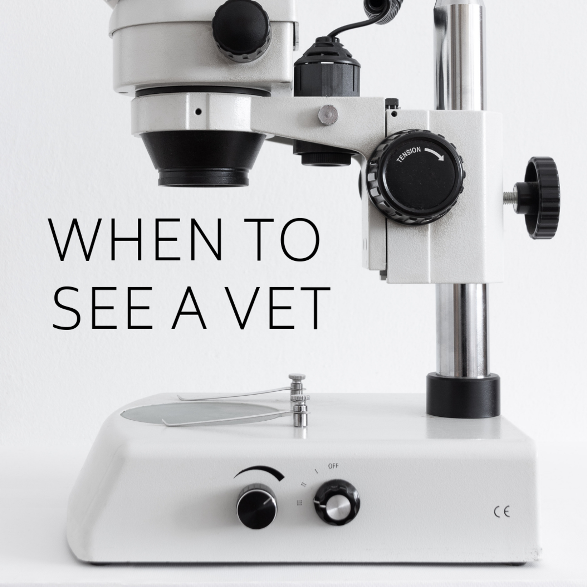 When to see a veterinarian.