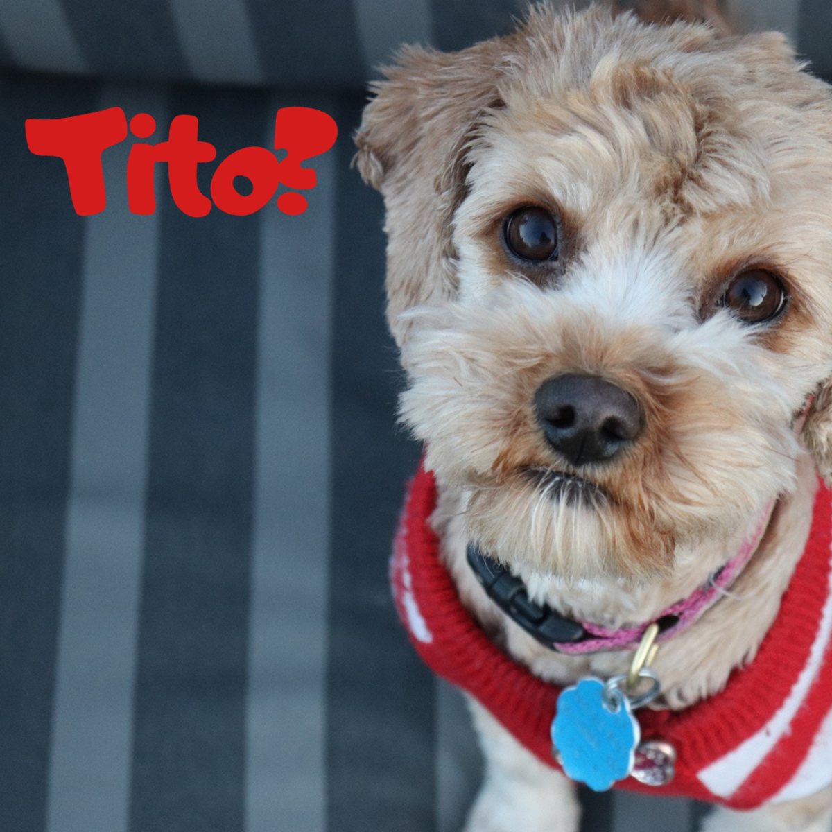Is he a Tito?
