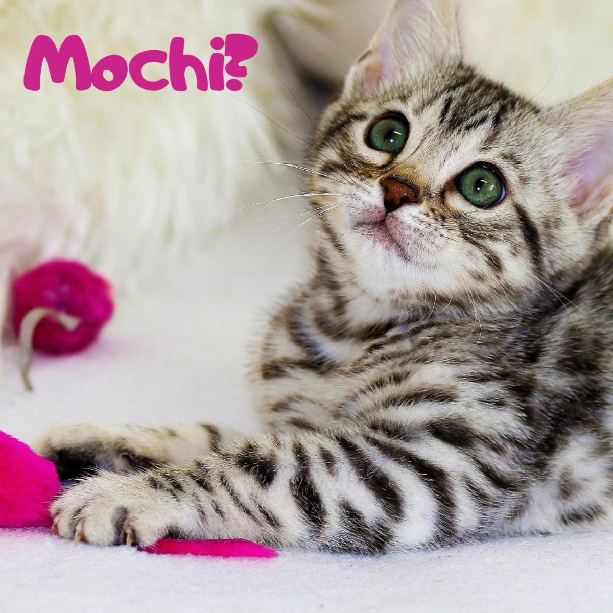 Is she a Mochi?