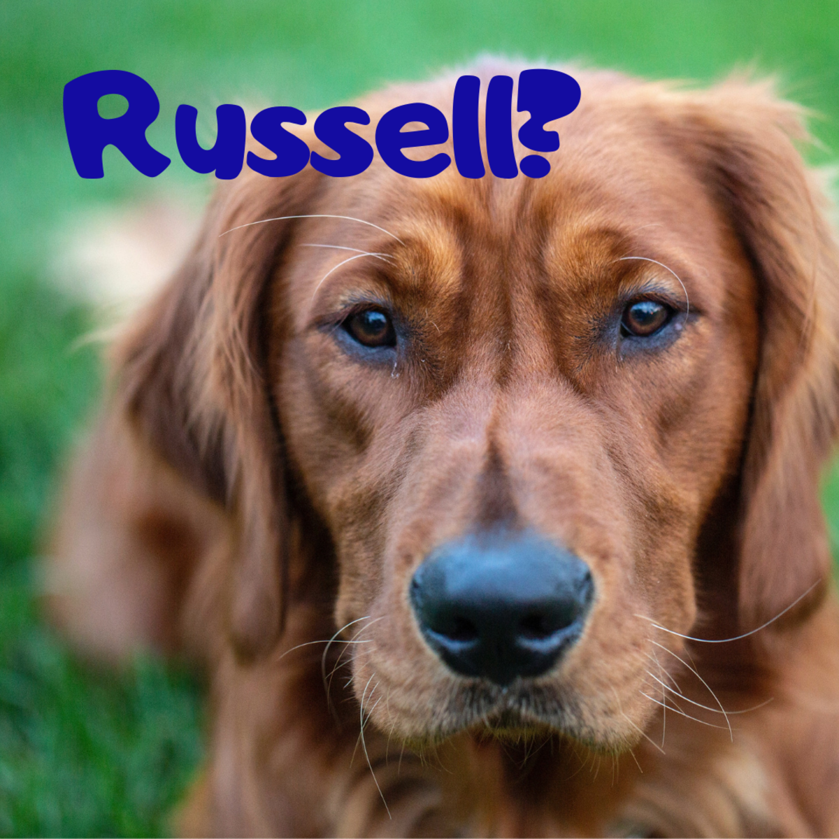 Is he a Russell?