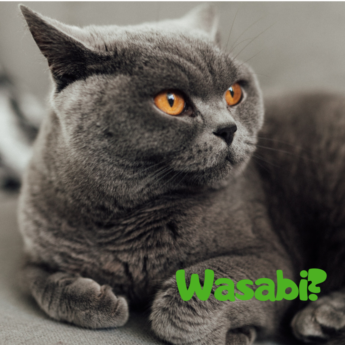 Is he a Wasabi?