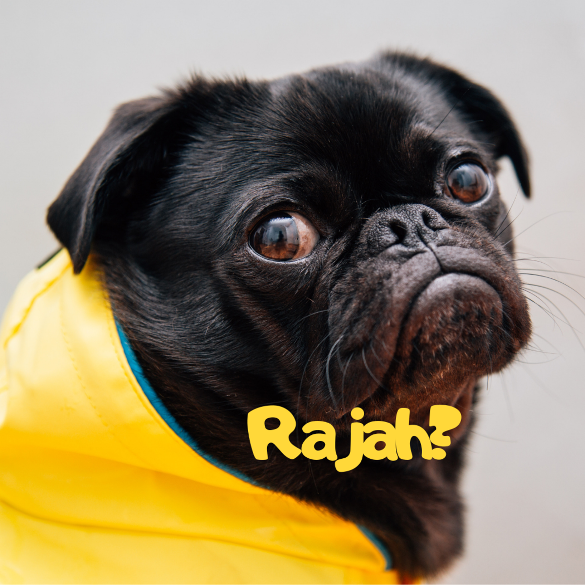 Is he a Rajah?