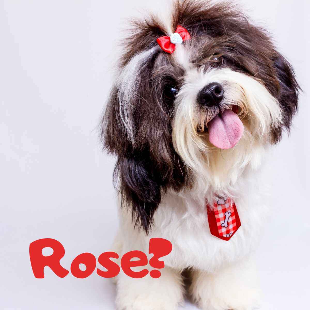 Is she a Rose?