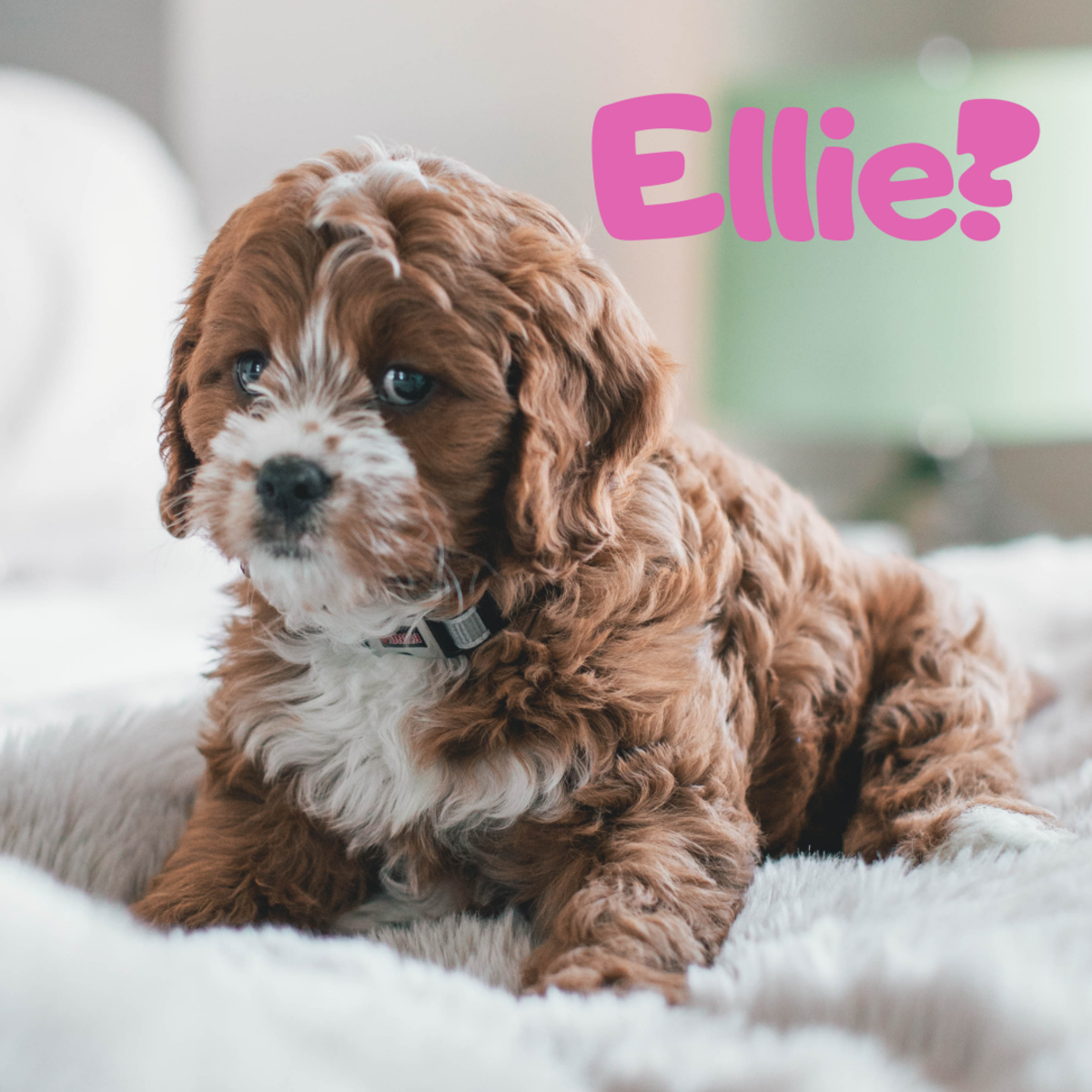 Is she an Ellie?