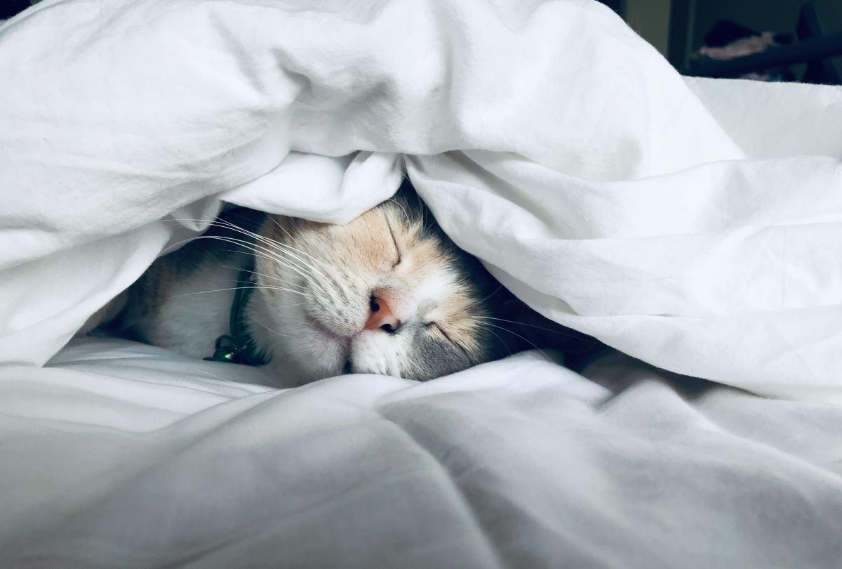 Happy cat happy life!