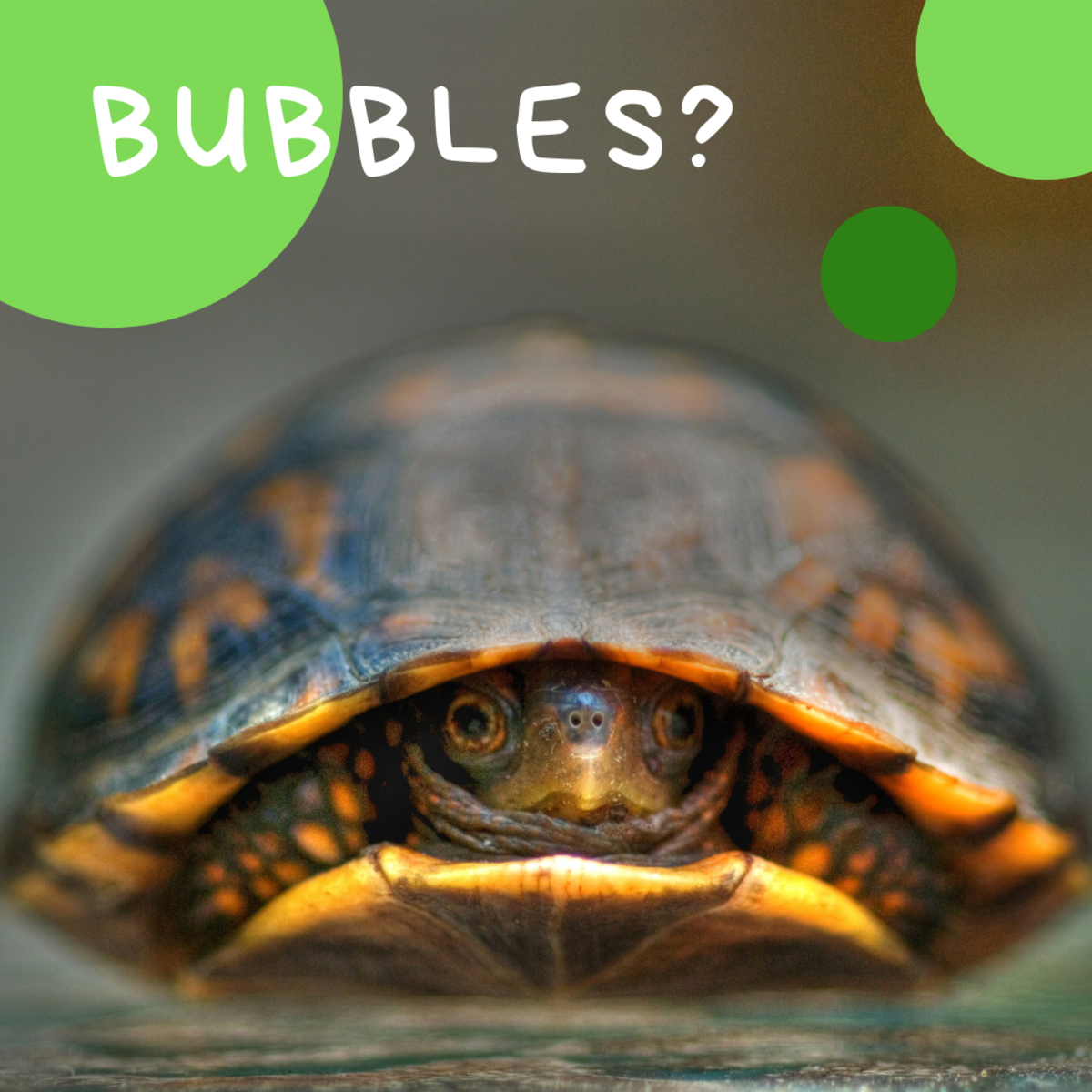 Is he or she a Bubbles?