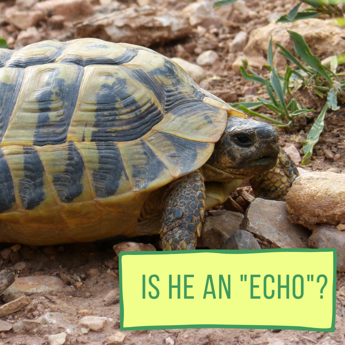100+ Awesome and Fun Pet Turtle and Tortoise Names ...