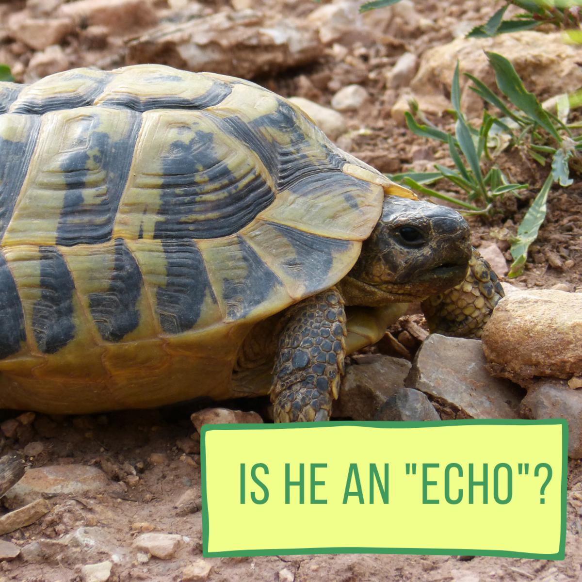 Is he an Echo?