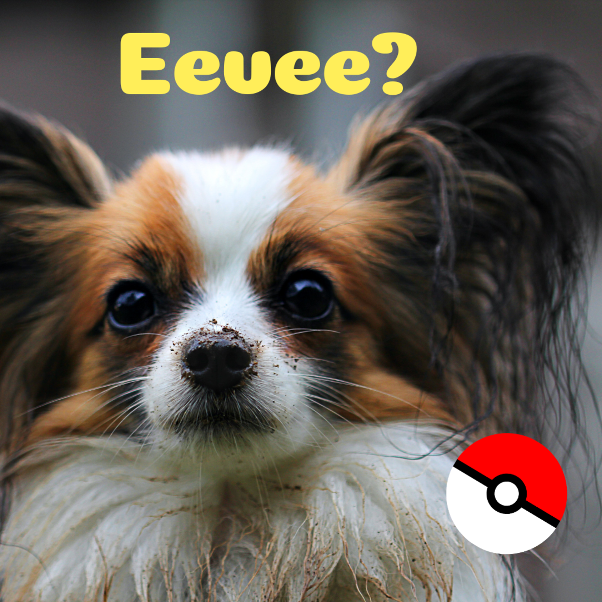 Is she an Eevee or an Evie?