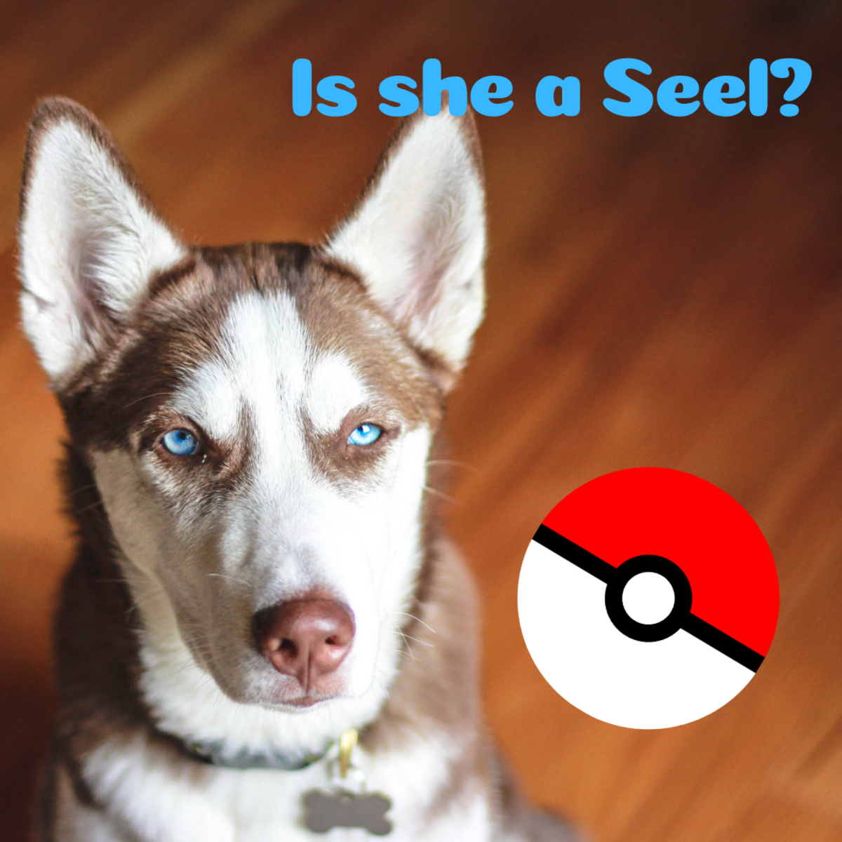 Is she a Seel?