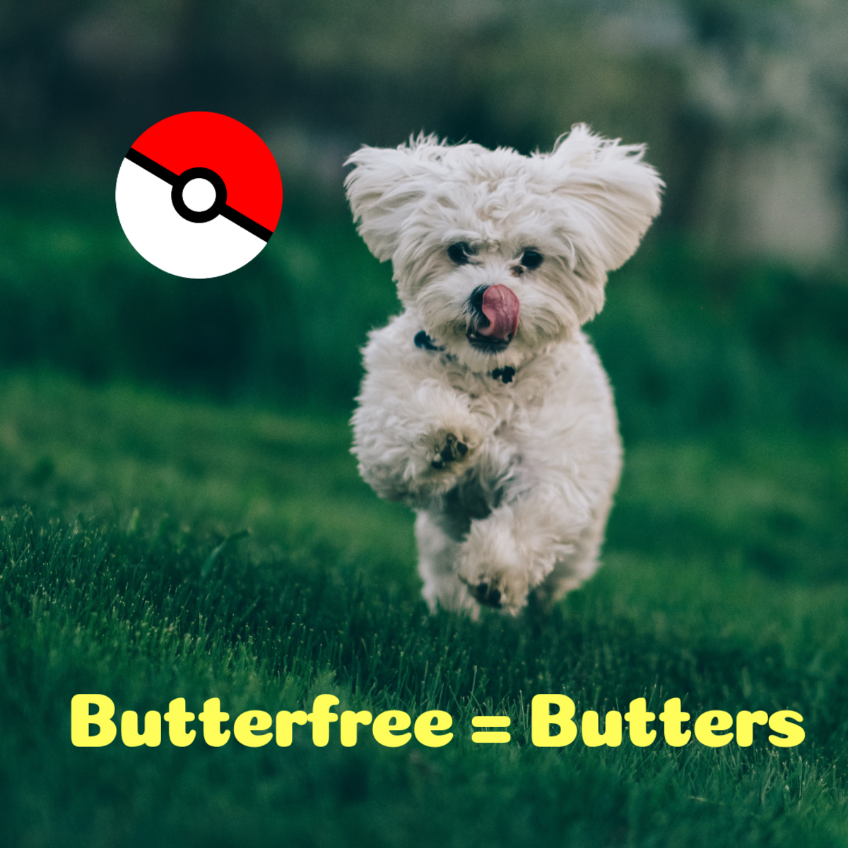 Butterfree = Butters