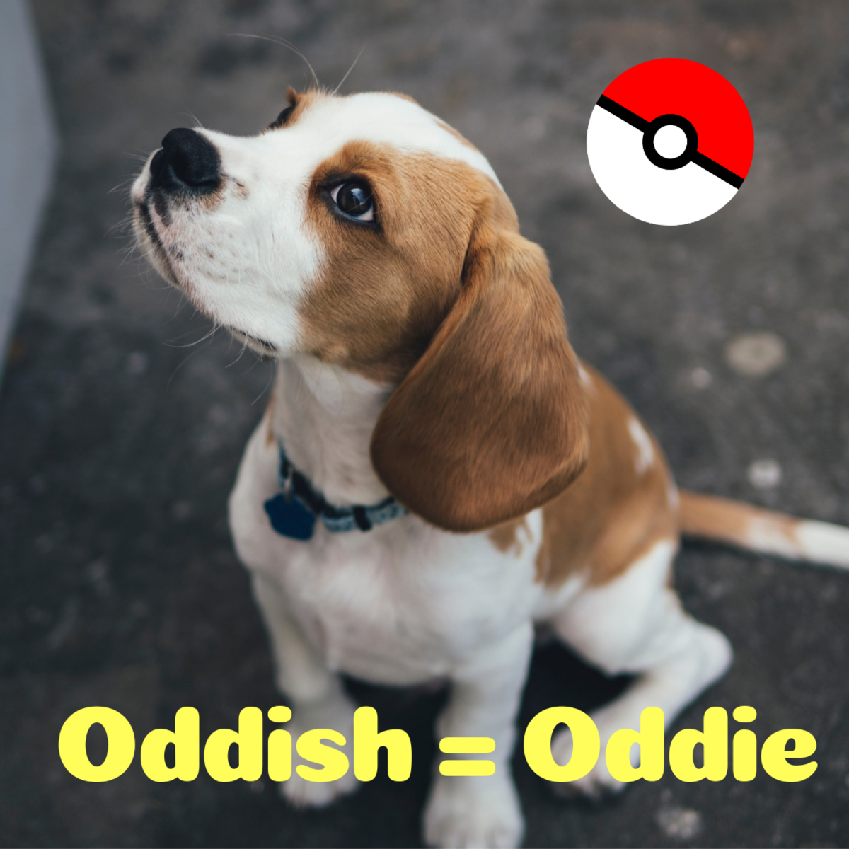 Is he an Oddie?