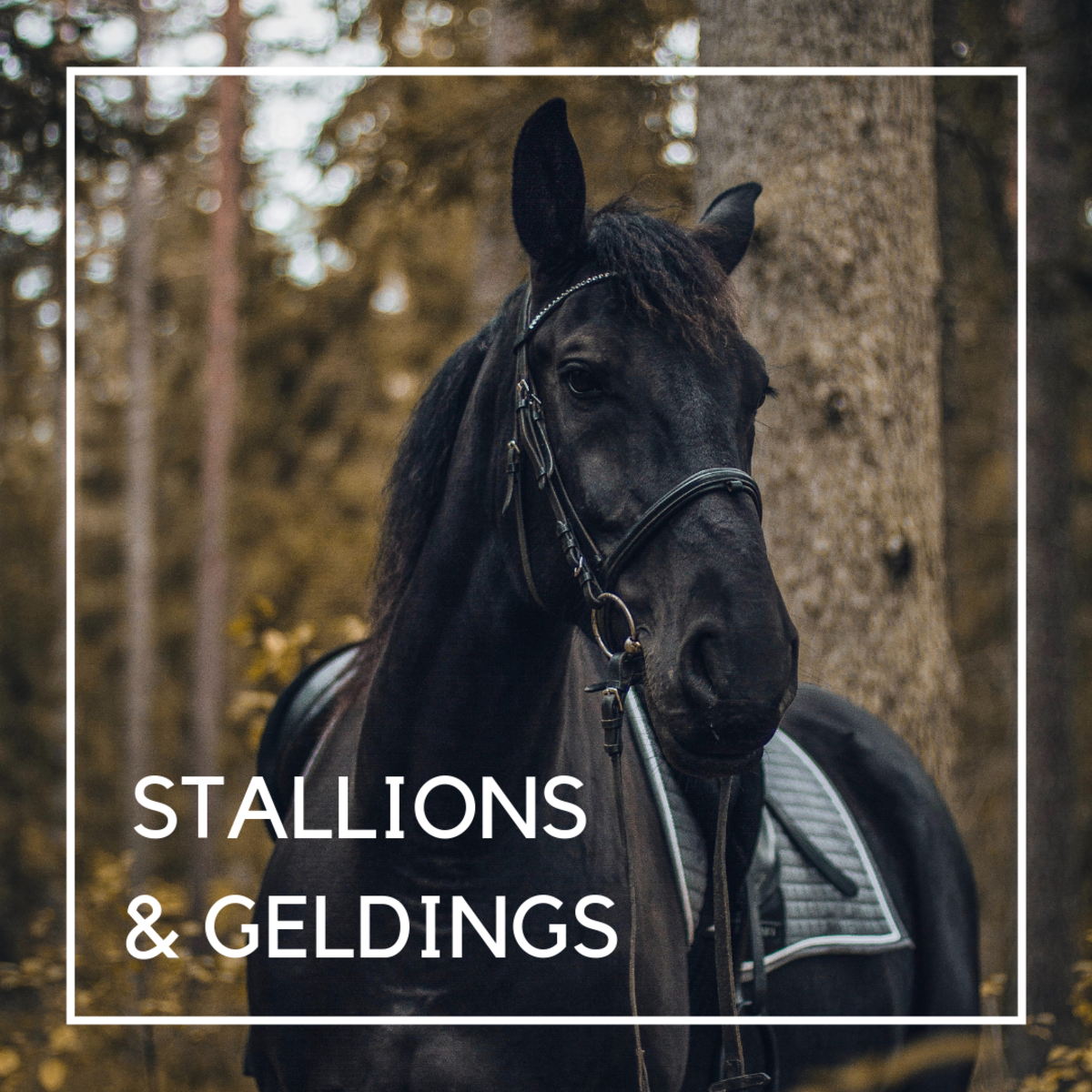Horse names for stallions and geldings.