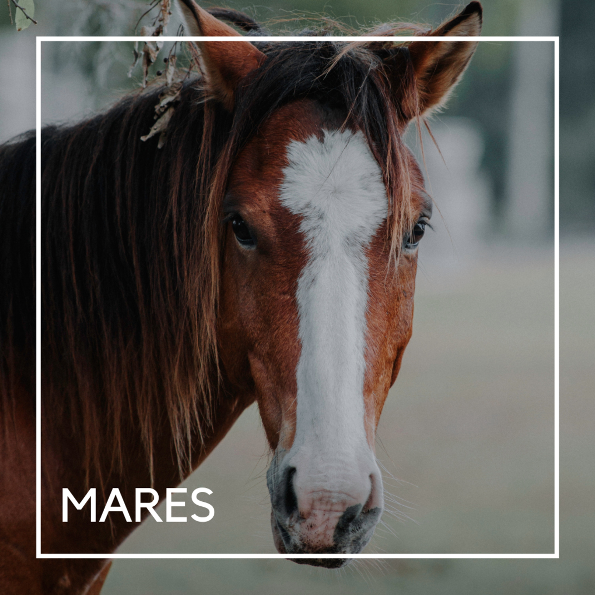 Horse names for mares.