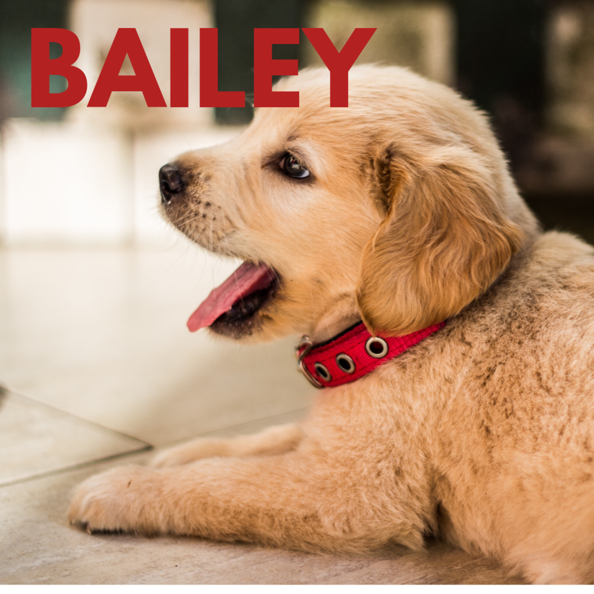 Is he a Bailey?