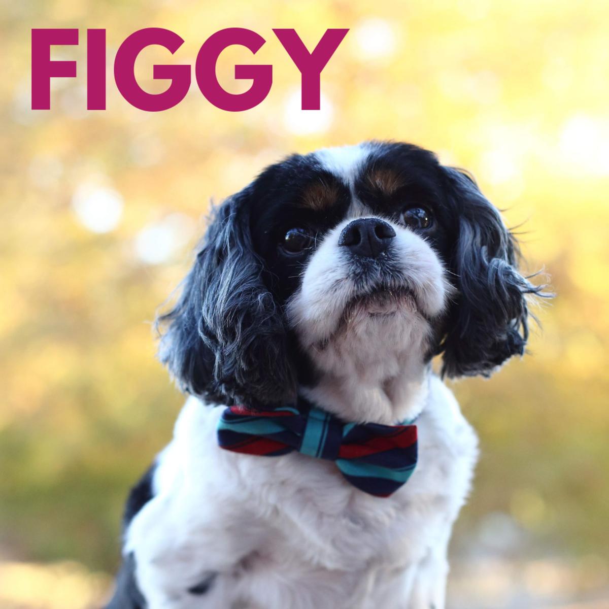 Is he a Figgy?