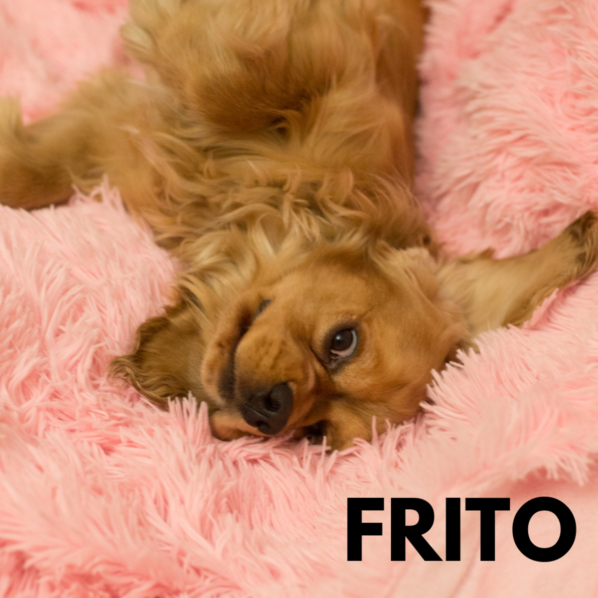 Is she a Frito?