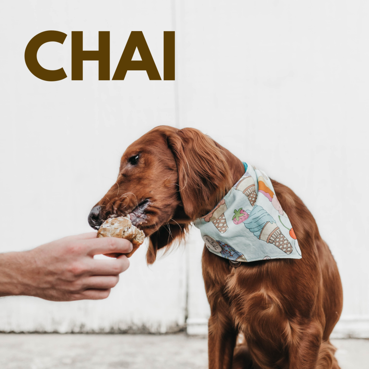 Is she a Chai?