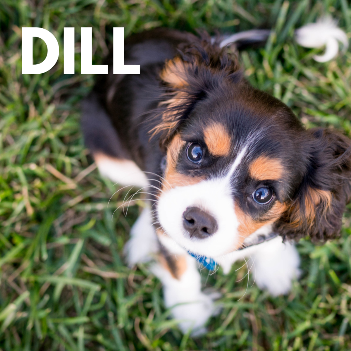 Is she a Dill?