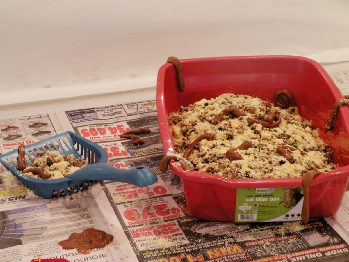 There you go: cat litter cake from the Ohio State Fair.