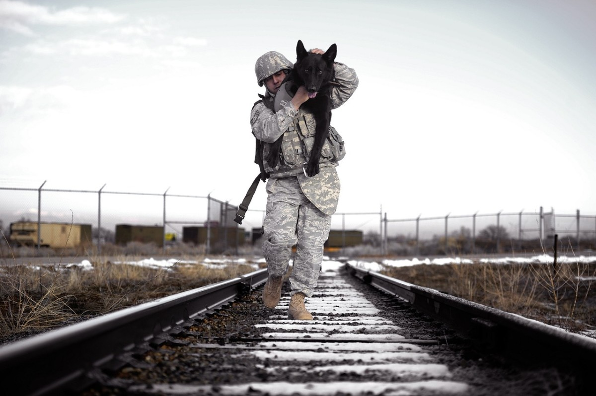 Military Service Dog