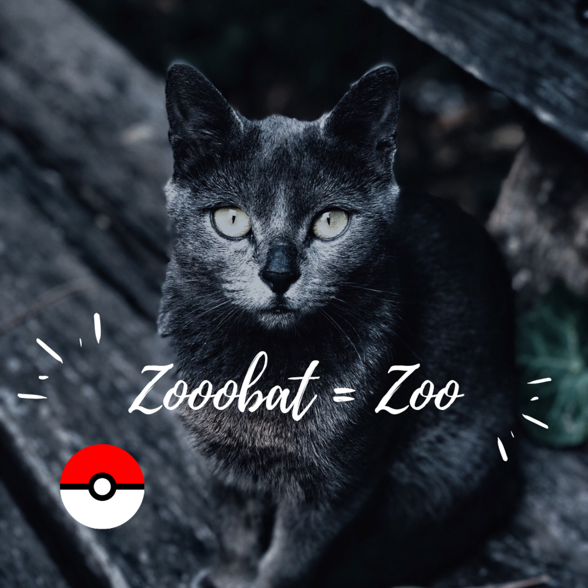 Zoobat or Zoo?