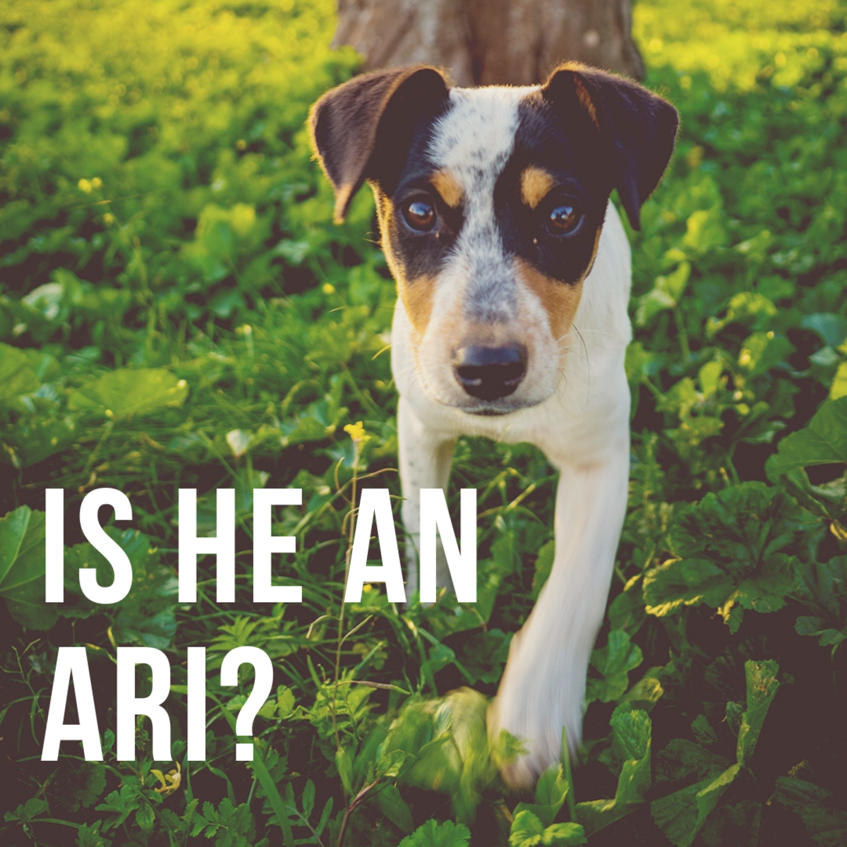 Is he an Ari?