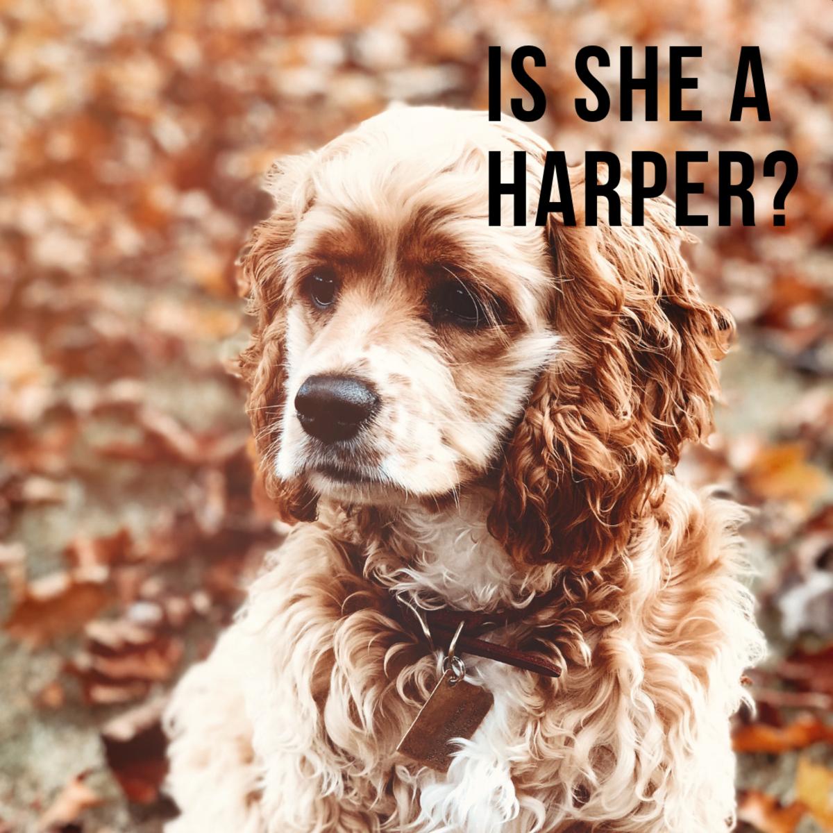 Is she a Harper?