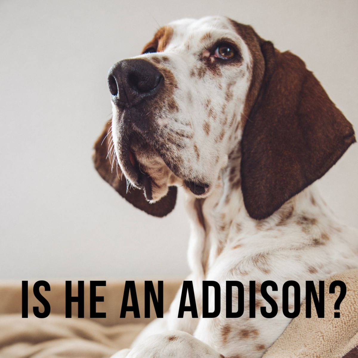 Is he an Addison?