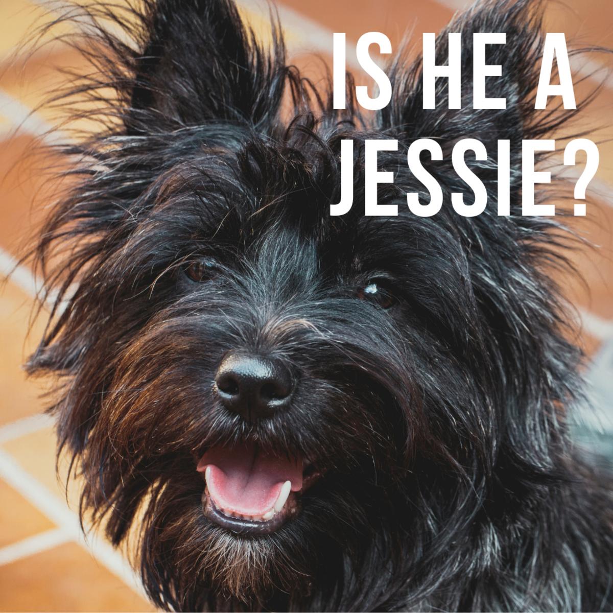 Is he a Jessie?